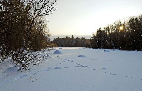 Leaving snowstorm
