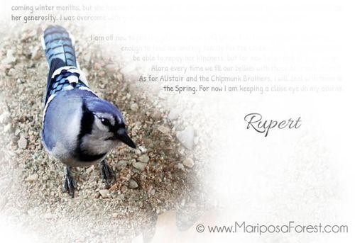 MariposaForest-1