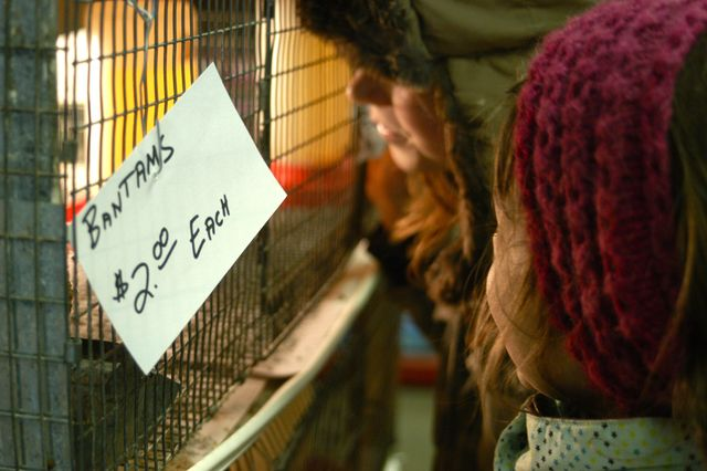 Chicken time!   Clean. : : the LuSa Organics Blog