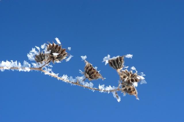 Frost medicine | Clean.