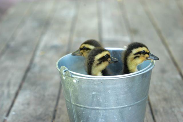 Farm babies | Clean. www.lusaorganics.typepad.com