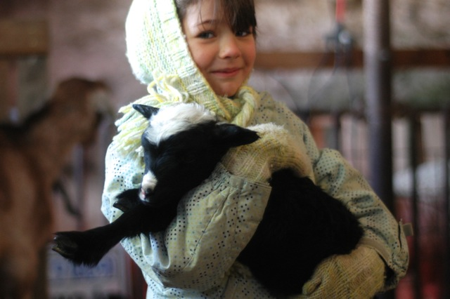 Winter lambs   Clean.