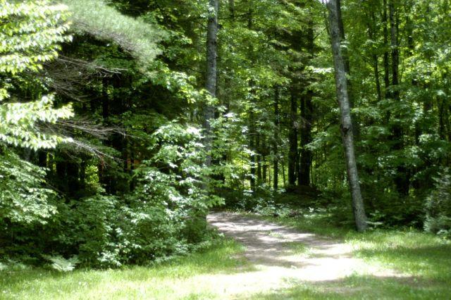 woods | Clean. www.lusaorganics.typepad.com