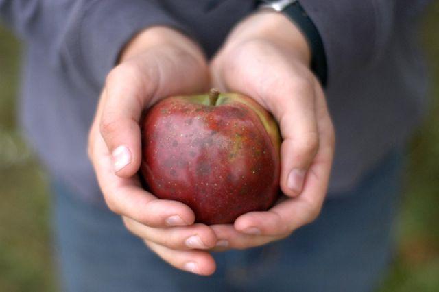 Gluten-free apple crisp recipe & honey-sweetened raw milk ice cream recipe | www.lusaorganics.typepad.com