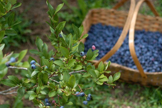Blueberry crisp for dinner (GF/DF/EF recipe included)