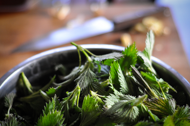 Five reasons to make nettle soup right now - Clean.